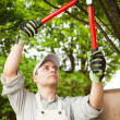 Stock Photo: Gardener pruning a tree