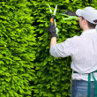 Foto Stock: Gardener pruning hedge