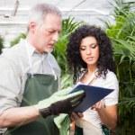 Workers examining plants — Stock Photo