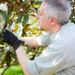 Stock Photo: Gardener pruning tree