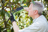 Gardener thinking to prune a tree — Stock Photo