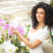 Woman looking to orchids — Stock Photo