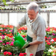 Worker watering plants — Stockfoto
