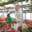Worker watering plants — Foto de Stock