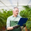 Gardener examining plants — Stock Photo