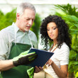 Workers examining plants in a greenhouse — Stock Photo #30025205