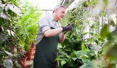 Gardener trimming a plant — Stock Photo