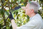 Gardener thinking to prune a tree — Stock Photo