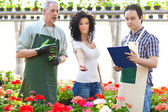 Portrait of a woman shopping in a greenhouse — Stock Photo