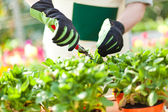 Portrait of a gardener trimming a plant — Stock Photo