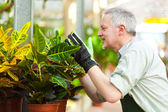 Gardener examining a plant in a greenhouse — Stock Photo