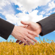 People shaking hands in a wheat field — Stock Photo