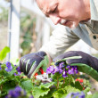 Stock Photo: Gardener pruning plant