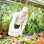 Gardener examining a plant — Stock Photo