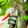 Gardener pruning a tree — Foto Stock