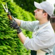 Gardener pruning an hedge — Foto Stock