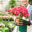 Stock Photo: Greenhouse worker holding flower pot