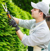Gardener pruning an hedge — Stock Photo
