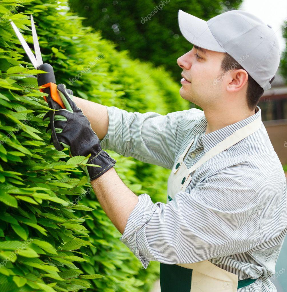 Jardinero podar un seto foto de stock minervastock for Donare un giardiniere