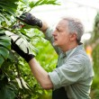 Gardener checking a plant — Stock Photo