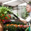 Gardener checking a plant — Stock Photo #34300109