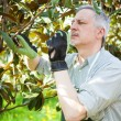 Man pruning a tree — Stock Photo