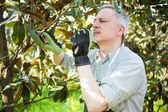 Man pruning a tree — Stock Photo