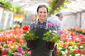 Gardener in a greenhouse — Stock Photo