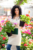 Woman holding flower pots — Stock Photo