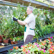 Stock Photo: Gardener examining plant in greenhouse