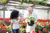 Greenhouse worker giving a plant to a customer — Stock Photo