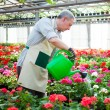 Stock Photo: Greenhouse worker