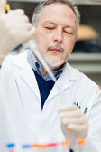 Scientist in a chemical laboratory — Stock Photo