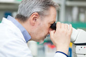 Mature biologist using a microscope — Stock Photo