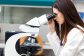 Scientist  looking through microscope — Stock Photo