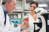 Forskare vid arbete i ett laboratorium — Stockfoto