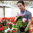 Man at work in greenhouse — Stock Photo