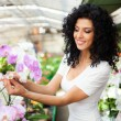 Woman looking at flowers in greenhouse — Stock Photo #50349699