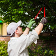 Gardener pruning a tree — Stock Photo #50349849