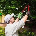 Gardener pruning a tree — Stock Photo