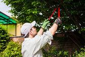 Jardineiro podando uma árvore — Foto Stock