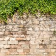 Stock Photo: Old medieval wall covered by ivy
