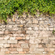 Стоковое фото: Old medieval wall covered by ivy