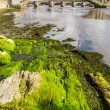 Green seaweed under bridges in Berwick-upon-Tweed — Foto Stock #12306185