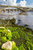 Seaweed on a rock under the bridge in Berwick-upon-Tweed — Φωτογραφία Αρχείου