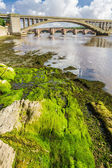 Alga verde sotto i ponti a berwick-upon-tweed — Foto Stock
