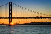 Birds flying at sunset under the bridge — Stock Photo