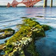 Stock Photo: Close Up seaweed and Forth Road Bridge
