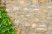 Old strone wall with climbers — Stock Photo