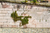 Medieval wall with climbers made from stones — Stock Photo